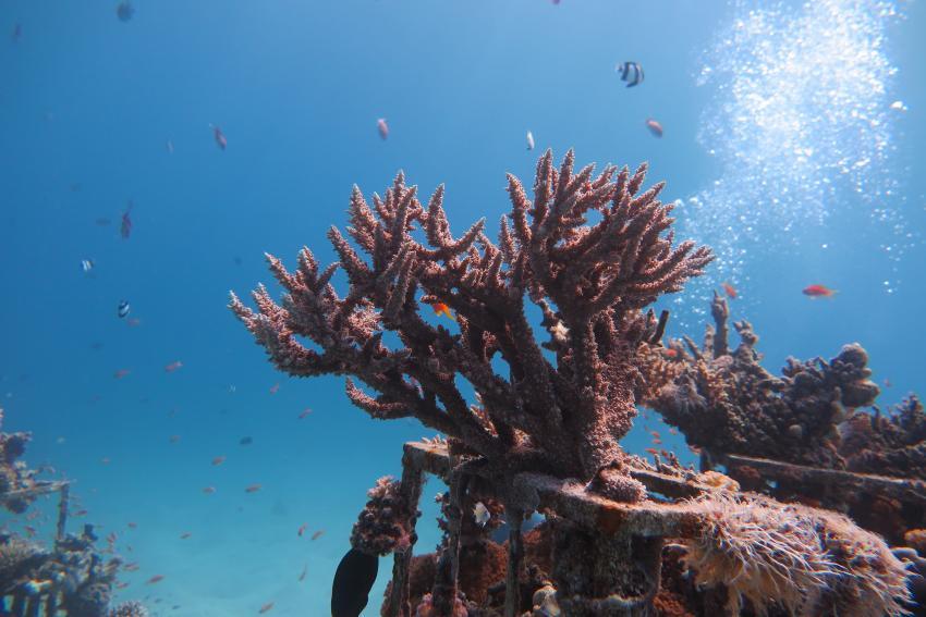 SWD4, Scuba World Divers Makadi Bay, Ägypten, Hurghada