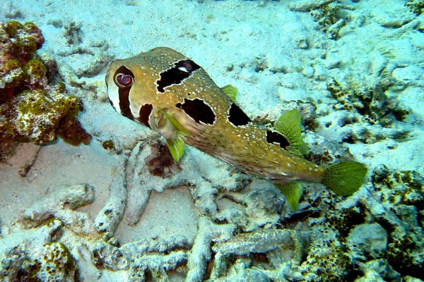 Makunudu, Makunudu,Malediven