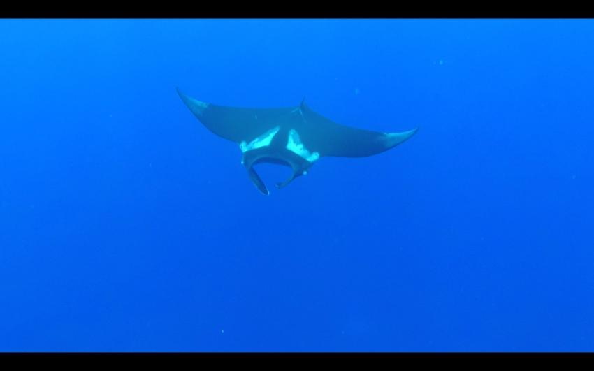 Manta, Manta Ray, Fuvahmulah Dive School, Fuvahmulah, Malediven