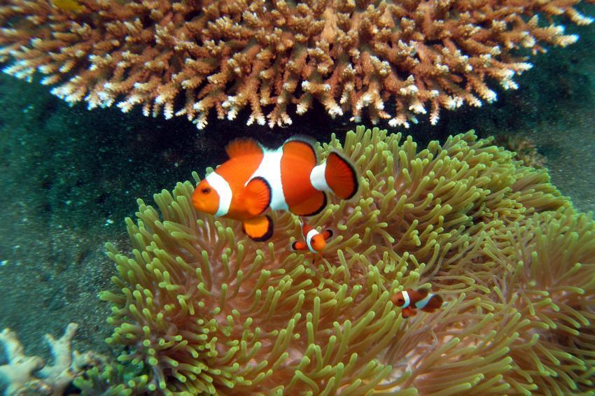 Amontillado Dive & Beach Resort, Negros