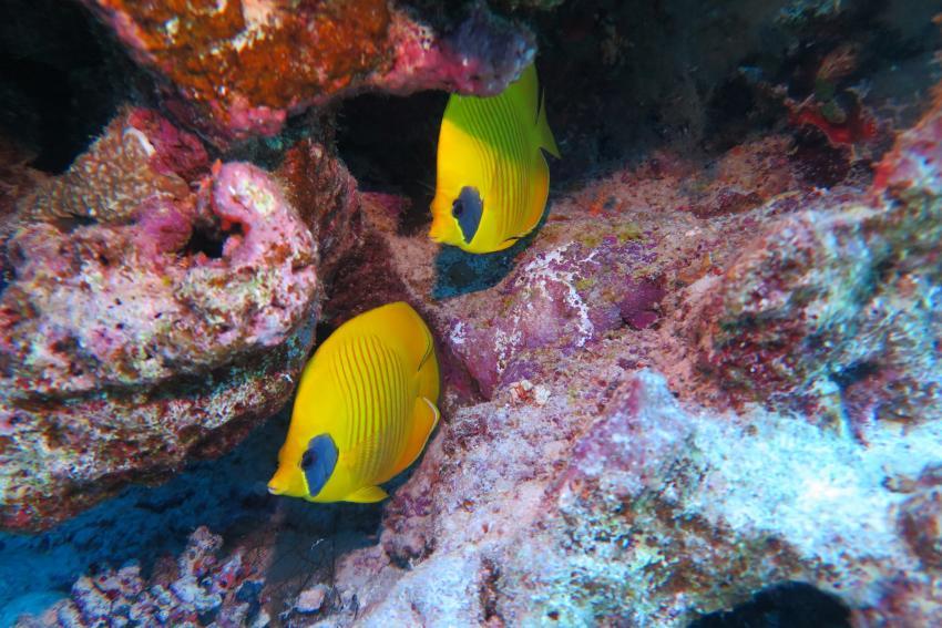 Scuba World Divers Soma Bay_15, Tauchen Ägypten Soma Bay, Scuba World Divers Soma Bay, Caribbean World Resort, Ägypten, Safaga