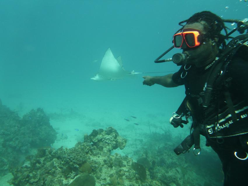 Marine Life Divers, Negril, Jamaika