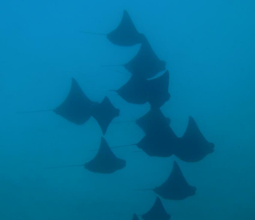 Galapagos Allgemein