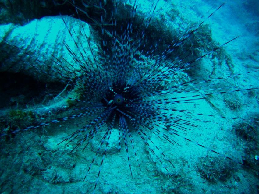 diadem seeigel, Pearl Diving Center, Antalya-Belek, Türkei