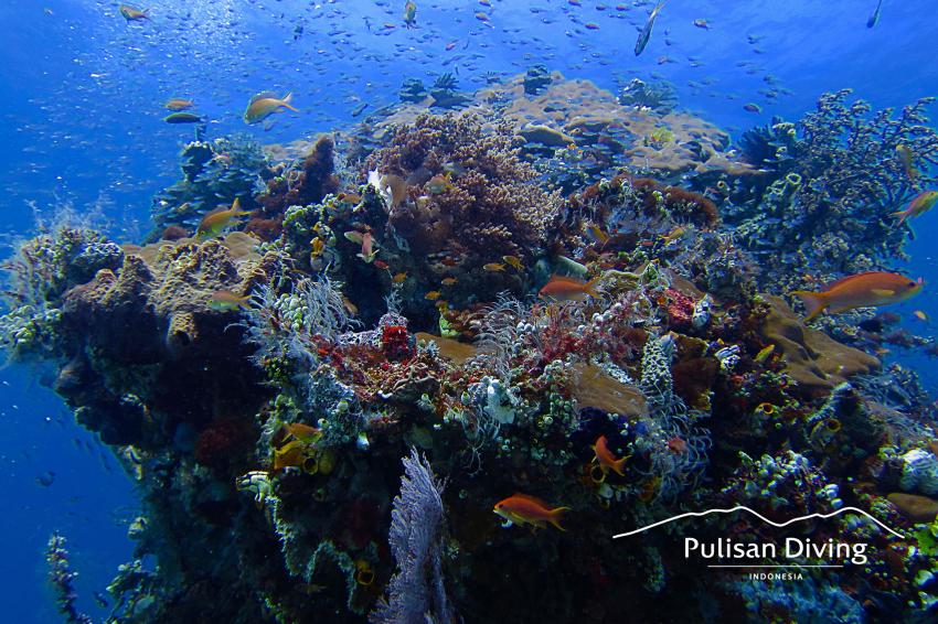 Pulisan Diving, Bangka Reef, Indonesia