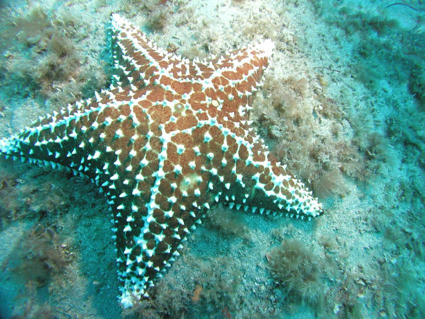Riviera Beach - Reef ´Frank´s Barge´, Riviera Beach,FL,Florida,USA
