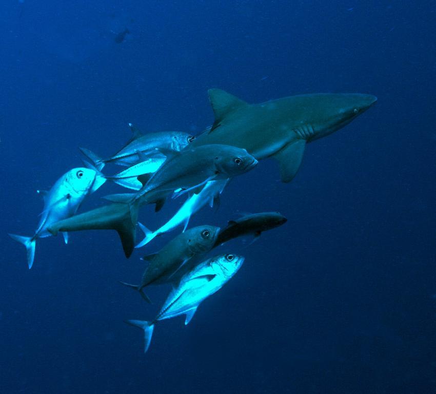 Shark City, Palau, Shark City, Palau