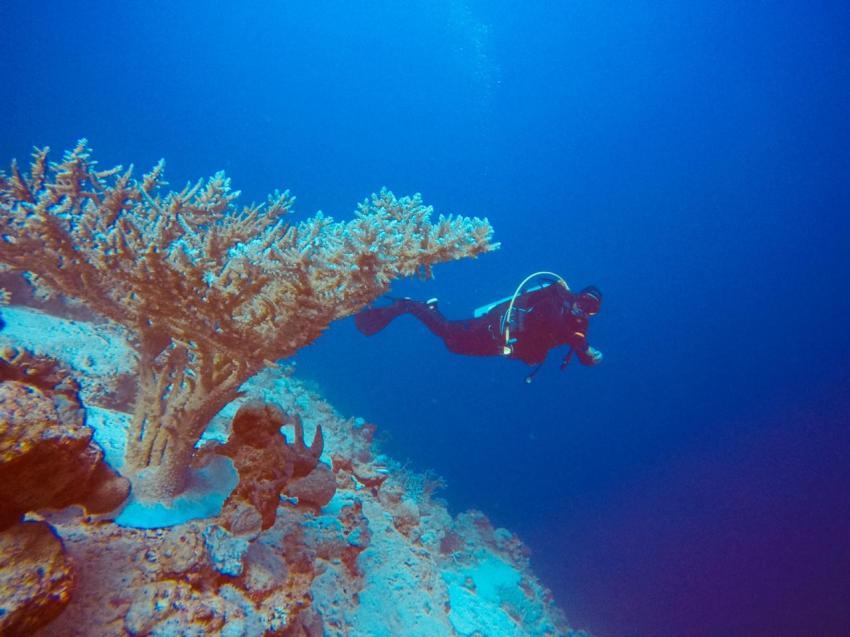 Scuba World Divers SuneoClub Reef Marsa?Hausriff_3, Tauchen Ägypten Marsa Alam Port Ghalib, Scuba World Divers, SuneoClub Reef Marsa, Port Ghalib, Ägypten, El Quseir bis Port Ghalib
