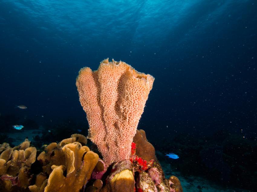 Sponge Reef © Aruba Tourism Authority, Sponge Reef, Niederländische Antillen, Aruba
