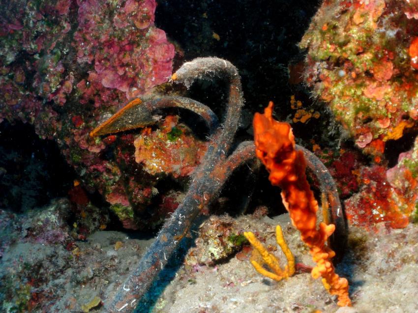 Tauchkreuzfahrt Marmaris - J-Dive, Marmaris,Türkei