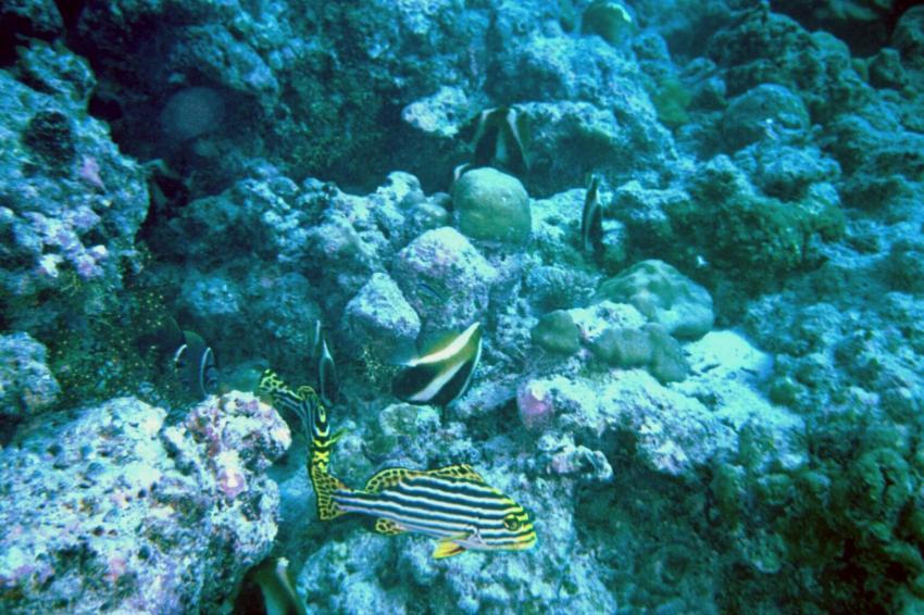 Veligandu Island, Veligandu,Malediven