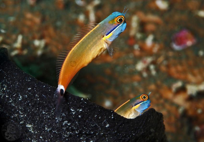Indonesien - Nord Molukken - Halmahera, Halmahera,Indonesien