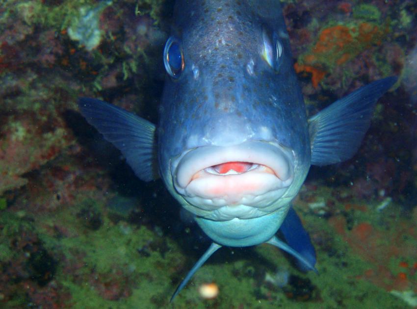 Mahe,Beau Vallon -Ocean Dream Divers