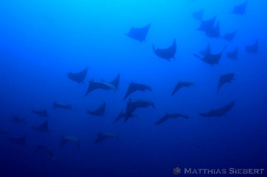 Schwebeteile, Donkalo Thila,Ari Atoll,Malediven