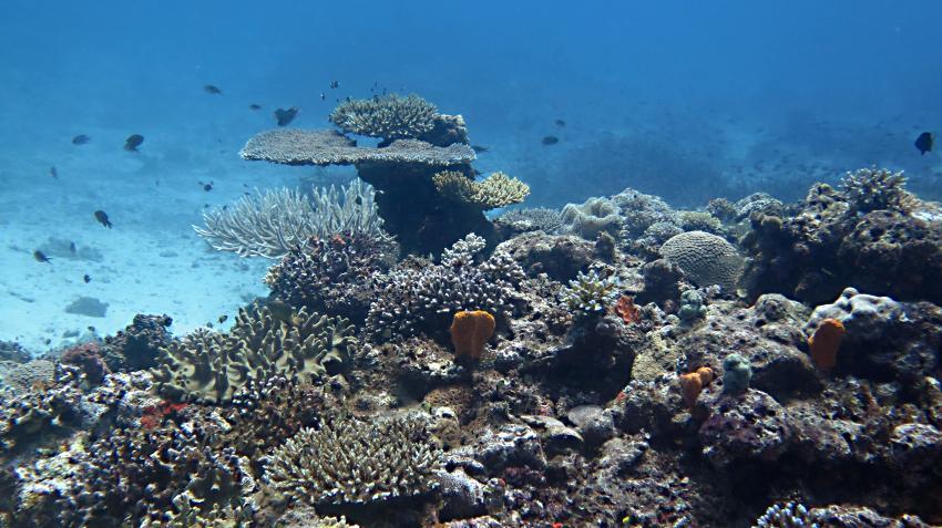Dolphin Bay Divers, Vanua Levu, Fidschi