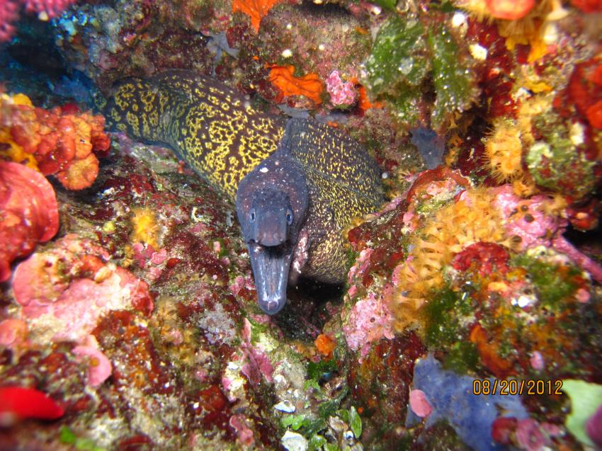 Moertorio island, Ira Diving Club, Porto Rotondo (Sardinien), Italien, Sardinien