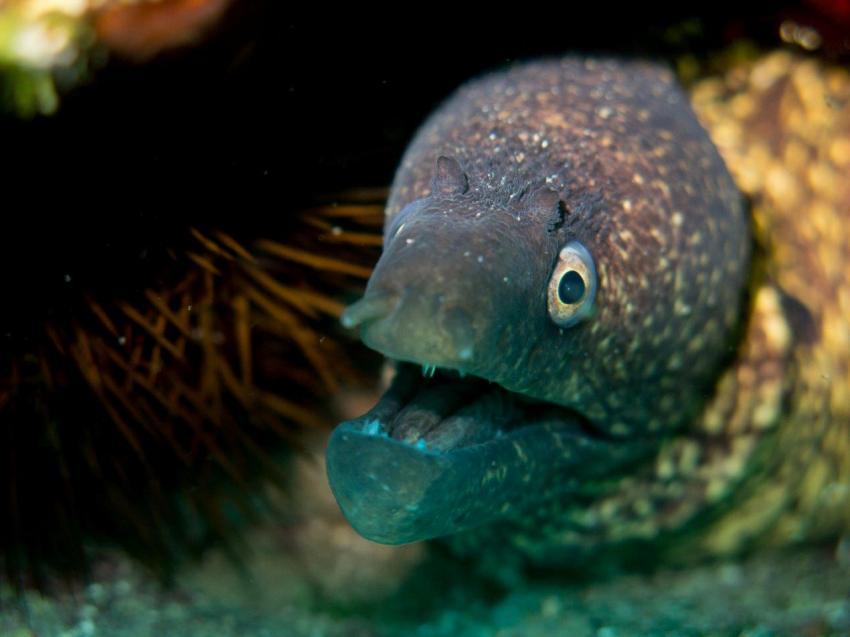 Bougainville Diving, Biograd, Kroatien