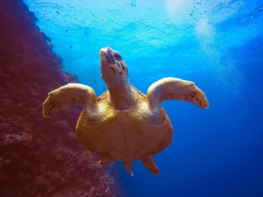 Scuba World Divers SuneoClub Reef Marsa?Hausriff_8, Tauchen Ägypten Marsa Alam Port Ghalib, Scuba World Divers, SuneoClub Reef Marsa, Port Ghalib, Ägypten, El Quseir bis Port Ghalib