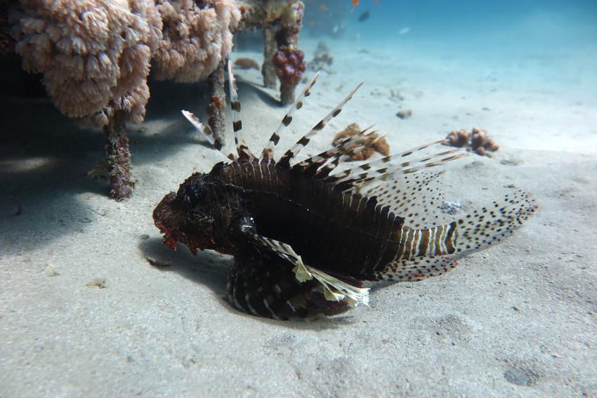 SWD5, Scuba World Divers Makadi Bay, Ägypten, Hurghada
