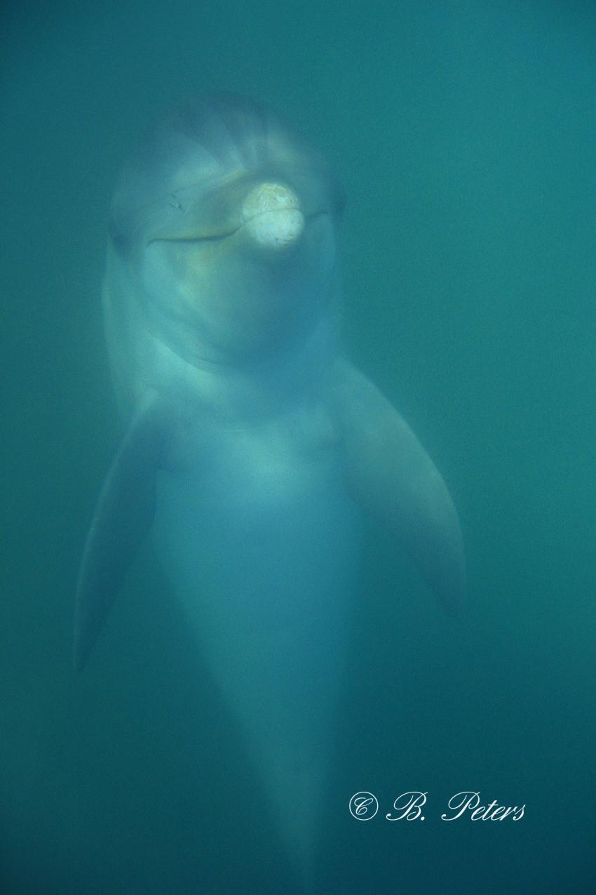 Bahia Naranjo, Bahia Naranjo,Kuba,Delphin,Delfin