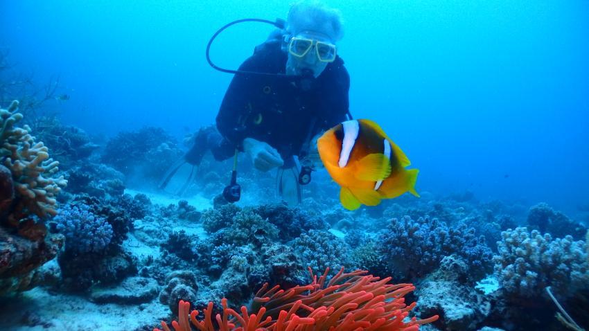Nemo am Dabab Riff 2, Ducks Superior Marsa Alam, Ägypten, Marsa Alam und südlich