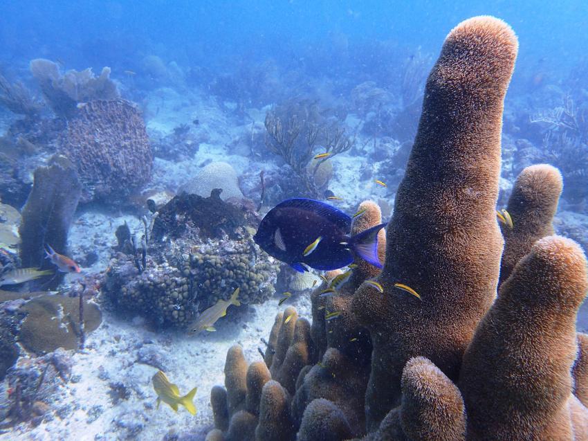 GO DIVE BAYAHIBE, Dominikanische Republik