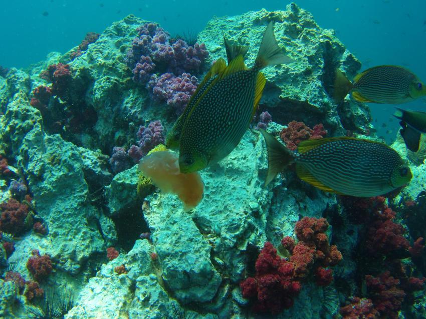 Dive Academy Phuket, Thailand, Andamanensee