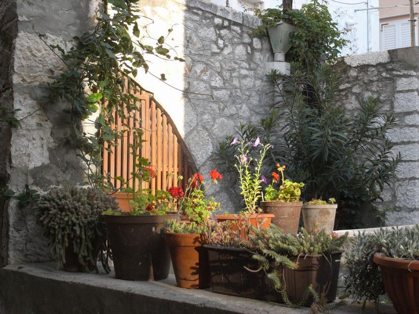 Blick in den netten Garten, Konoba Punat, Punat, Insel Krk, Kroatien