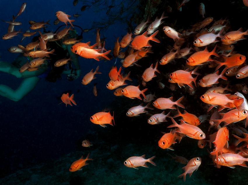 oben oder unten?, Soldatenfische, Ari Atoll, Angaga / Ari Atoll, Malediven