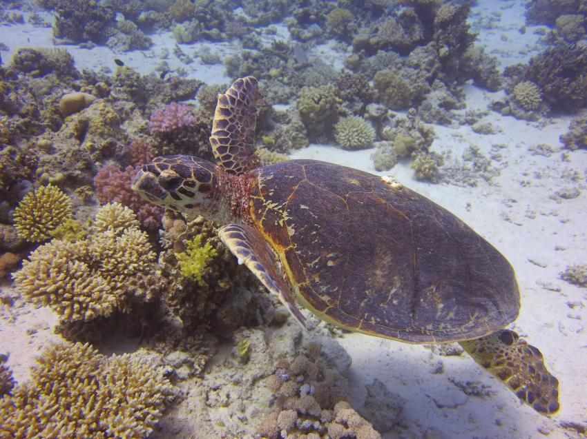 Fanadir Island, Fanadir Island,Ägypten