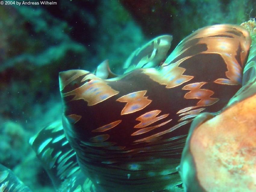 Racha Yai - Lucie´s Reef, Racha Yai - Lucie's Reef,Thailand