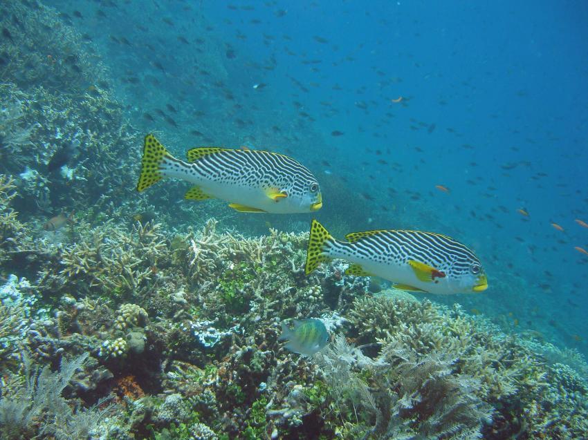 Gangga Island, Gangga Island,Nord-Sulawesi,Indonesien