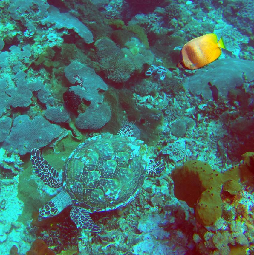 diving.DE Candidasa, Candi Beach, Bali, Indonesien, Bali