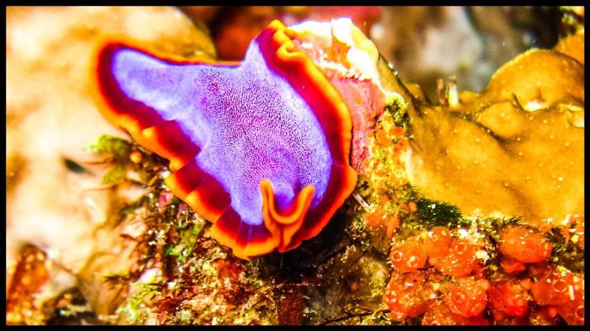 Reefseekers, Labuan Bajo, Indonesien, Allgemein