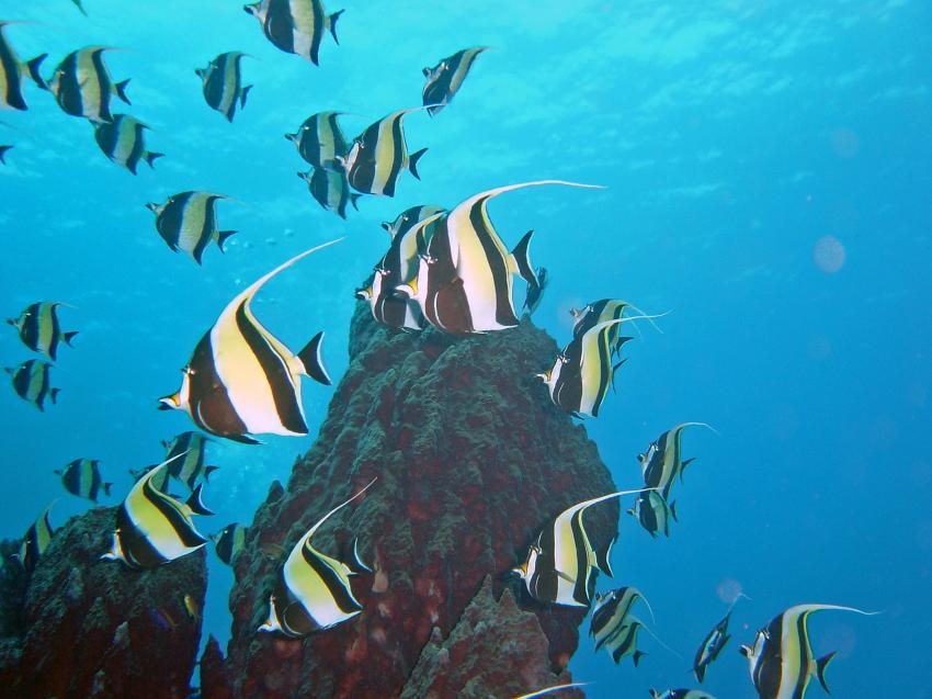 Togian - Island, Togian Islands,Indonesien