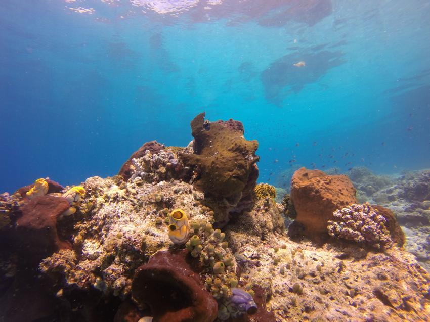 Nabucco's Cape Paperu Ressort & Spa - Extra Divers, Indonesien, Allgemein