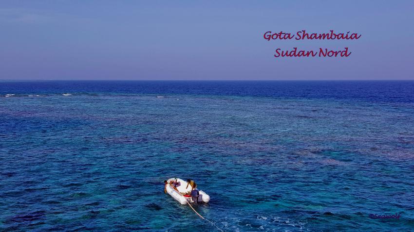 Gota Shambaia, Sudan Seawolf Diving Safari Riffkarte Dominator Gota Shambaia, Gota Shambaia, Sudan