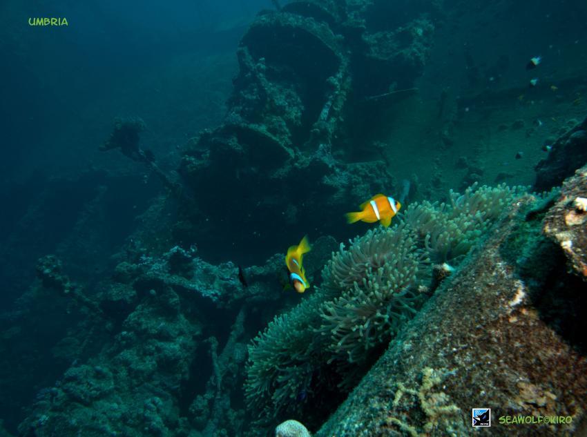 Umbria Deck, Sudan Wingate Reef Seawolf Safari Umbria, Umbria - Wingate Reef, Sudan