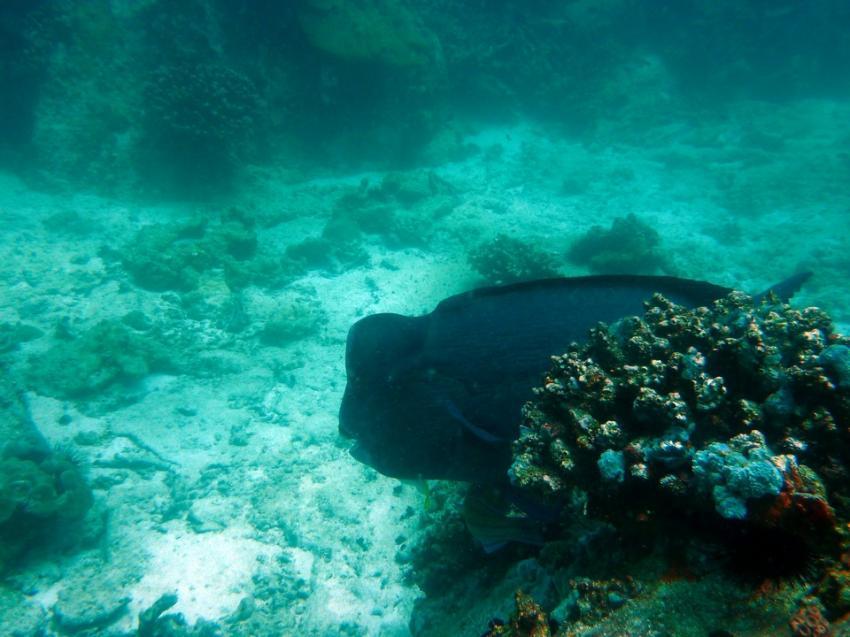 Ohne Worte, Whitetip Divers, Praslin, Seychellen