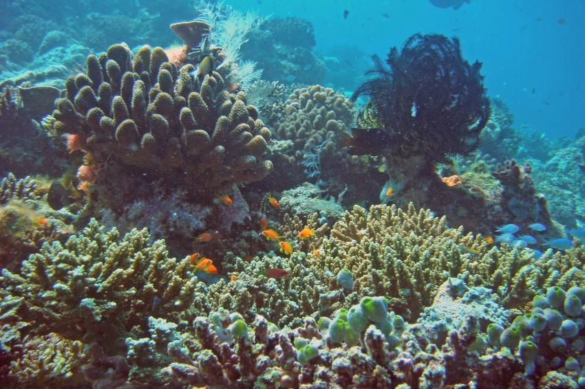 Angaga und seine Riffe, Angaga / Ari Atoll,Malediven