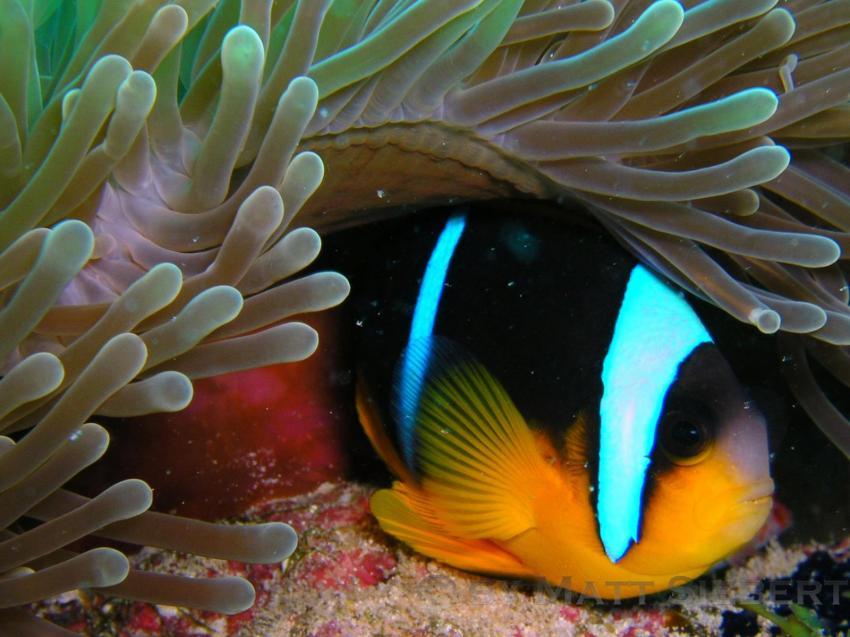 Zanzibar, Zanzibar,Tansania