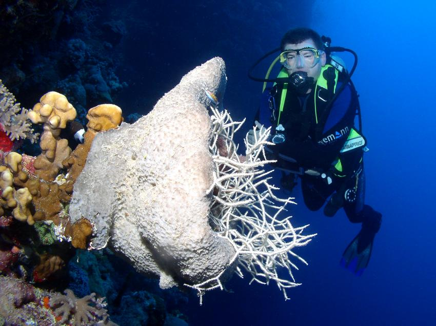 Tauchsafari auf der Dream Master, Farasan Banks,Saudi-Arabien,Taucher,Koralle