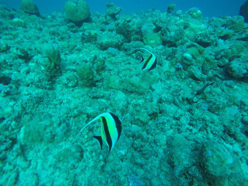 Dive Spirit, Mauritius