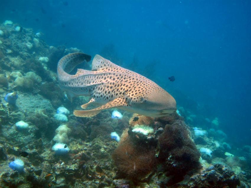 Dive-Down, Phuket