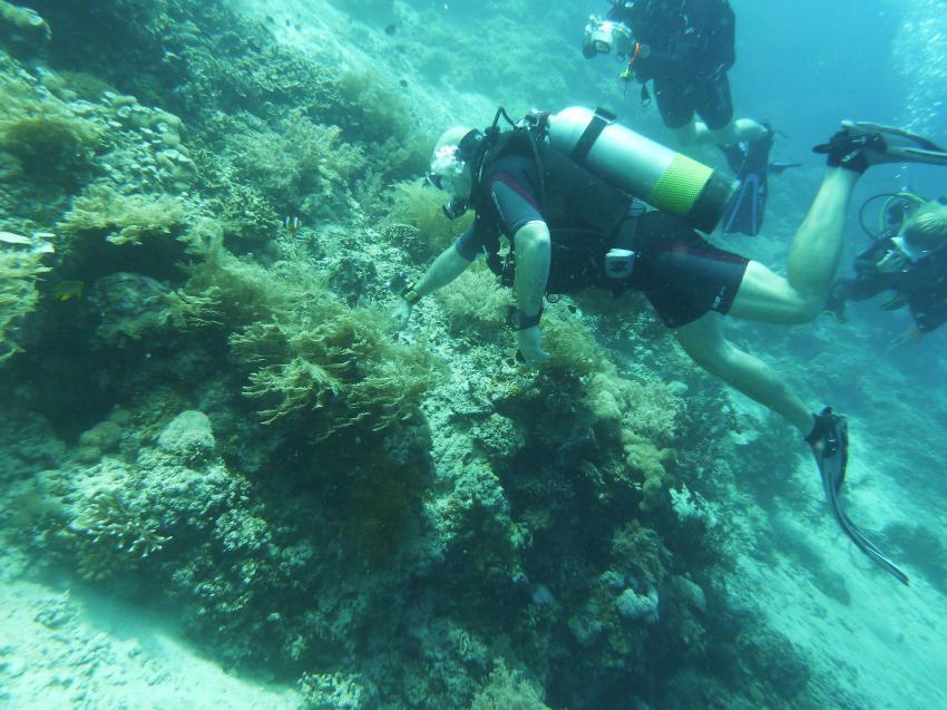 15.11.2014, Bali Insel Menjangan,Indonesien