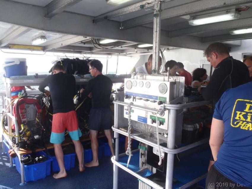 Spoilsport, Mike Ball, Cirans, Great Barrier Reef, Australien, Spoilsport, Mike Ball, Cirans, Great Barrier Reef, Australien, Mike Ball, Townsville