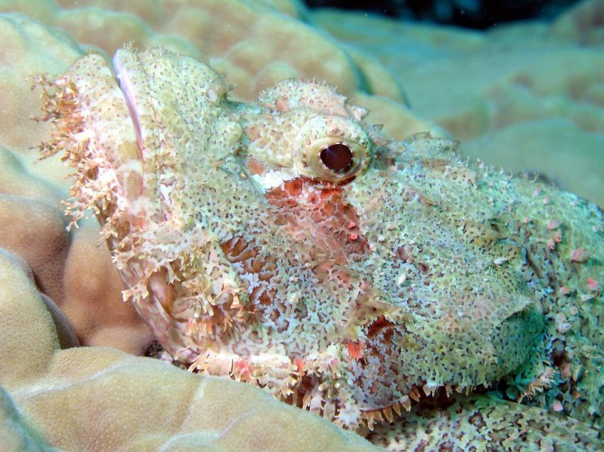 St. John´s Reef, St. John´s Reef,Ägypten