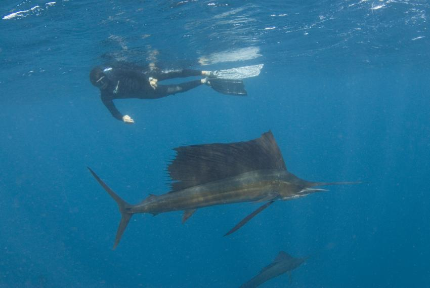 Sailfish Run Safari, Pro Dive Mexico, Dreams Puerto Aventuras & Spa, Mexiko