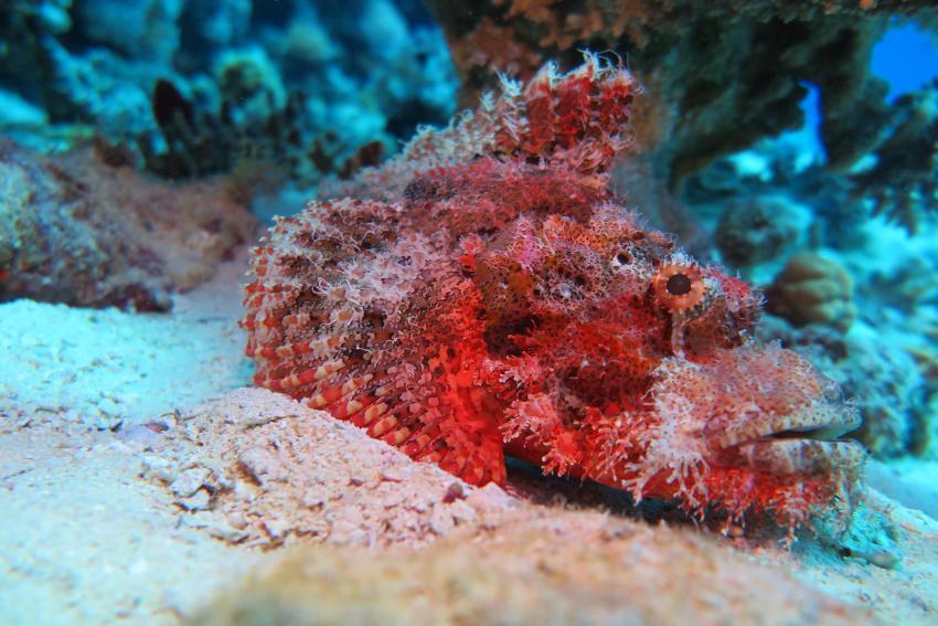 Soma Bay_6, Tauchen Ägypten Soma Bay, Scuba World Divers Soma Bay, Caribbean World Resort, Ägypten, Safaga