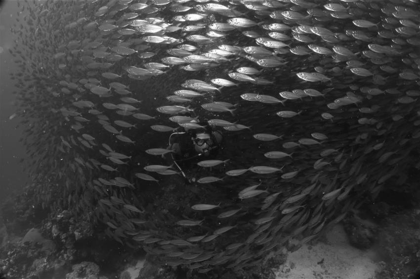 Taucher im Schwarm, Villa Mango Curacao Dive Center, Willemstad, Niederländische Antillen, Curaçao